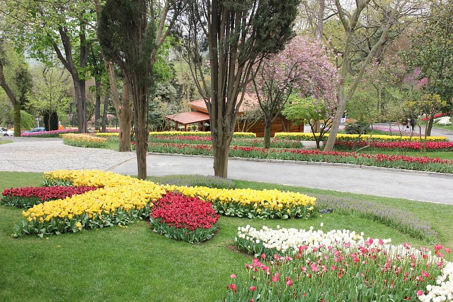 Цветы, тюльпаны, Эмирган, Стамбул, путешествия, Аксанов Нияз, фотография, Emirgan, Istanbul, kukmor, of IMG_4450
