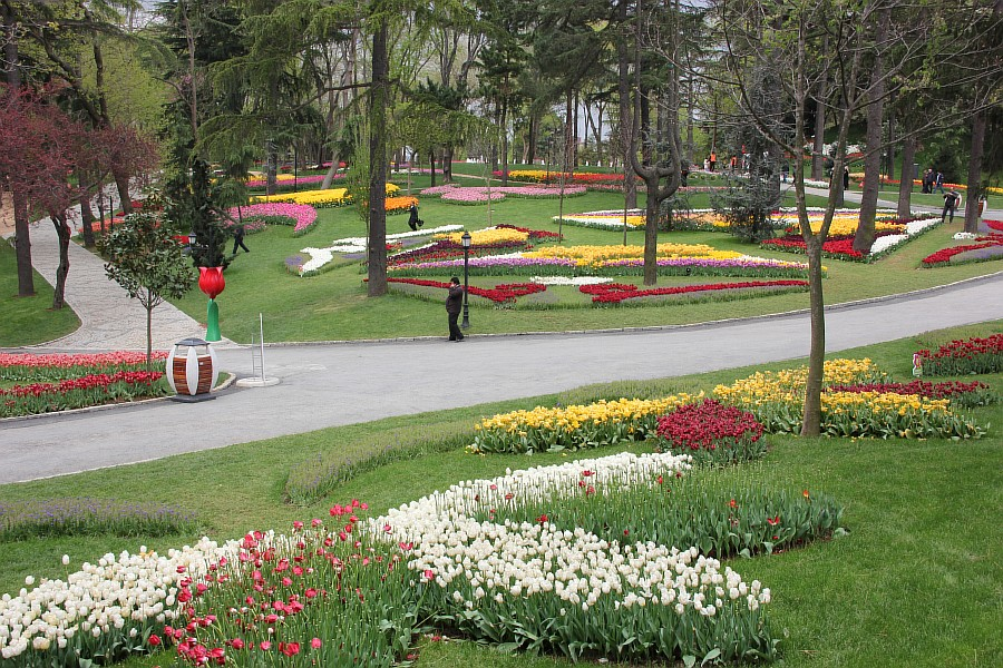 Цветы, тюльпаны, Эмирган, Стамбул, путешествия, Аксанов Нияз, фотография, Emirgan, Istanbul, kukmor, of IMG_4452