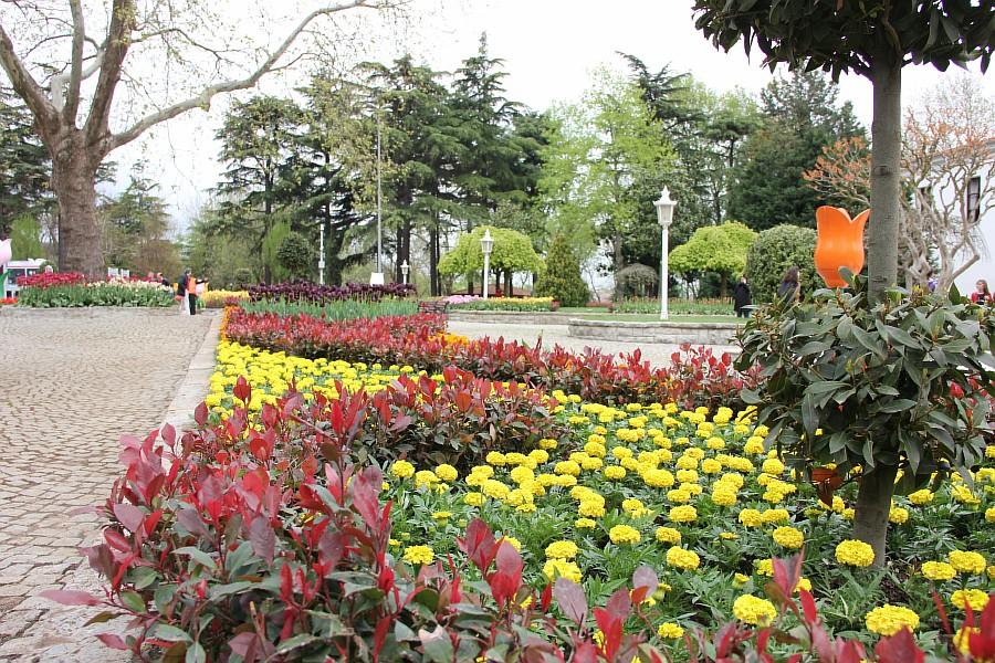 Цветы, тюльпаны, Эмирган, Стамбул, путешествия, Аксанов Нияз, фотография, Emirgan, Istanbul, kukmor, of IMG_4455