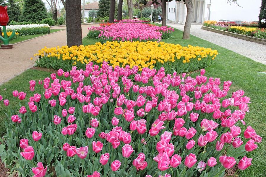 Цветы, тюльпаны, Эмирган, Стамбул, путешествия, Аксанов Нияз, фотография, Emirgan, Istanbul, kukmor, of IMG_4461