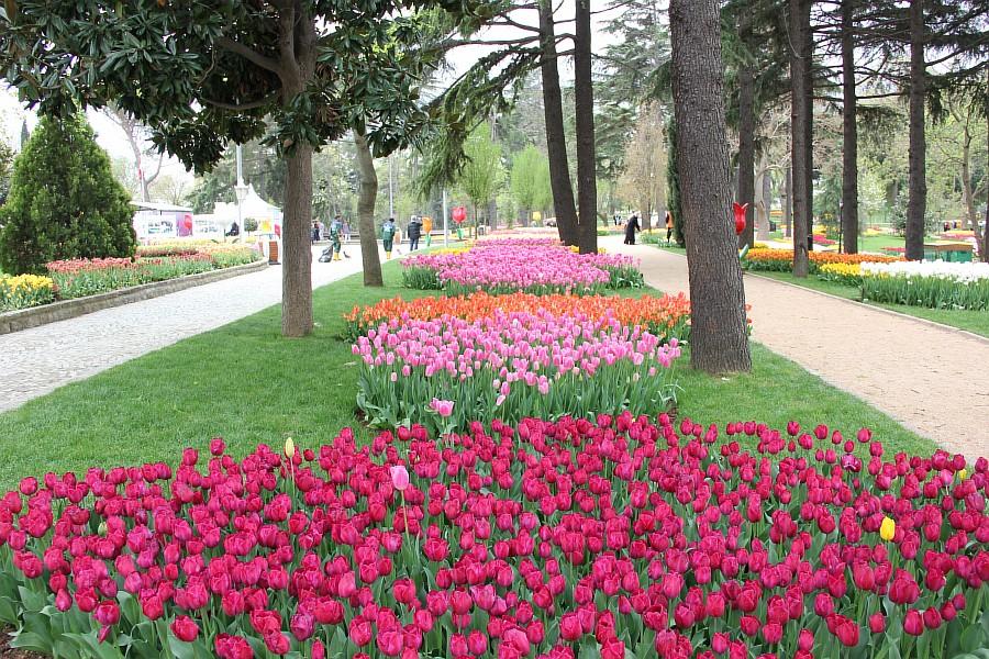Цветы, тюльпаны, Эмирган, Стамбул, путешествия, Аксанов Нияз, фотография, Emirgan, Istanbul, kukmor, of IMG_4469