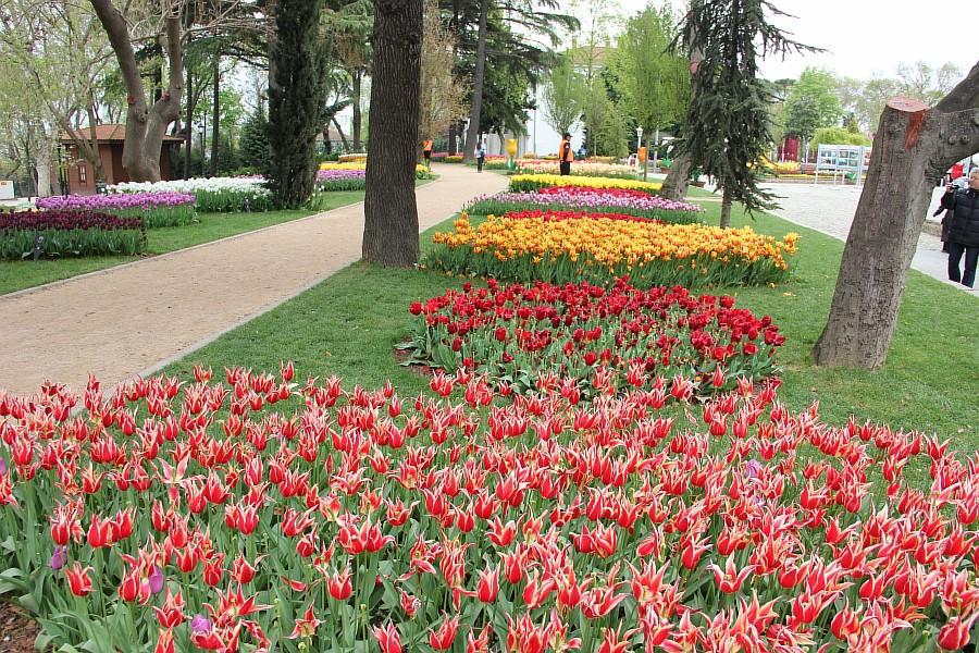 Цветы, тюльпаны, Эмирган, Стамбул, путешествия, Аксанов Нияз, фотография, Emirgan, Istanbul, kukmor, of IMG_4483