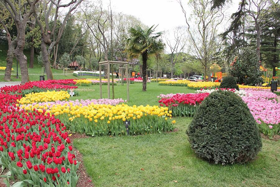 Цветы, тюльпаны, Эмирган, Стамбул, путешествия, Аксанов Нияз, фотография, Emirgan, Istanbul, kukmor, of IMG_4485