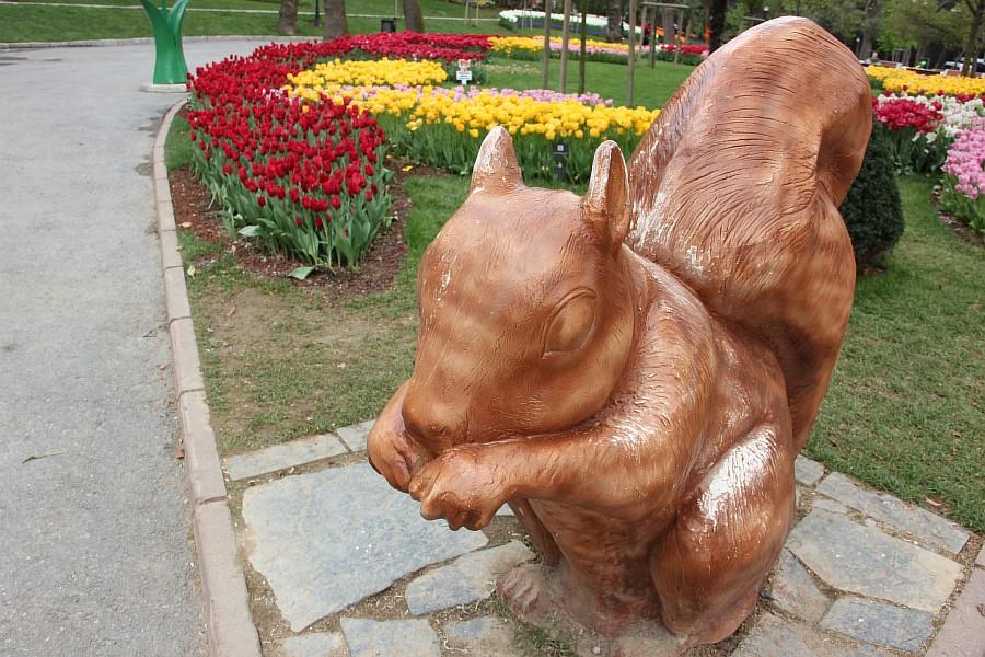 Цветы, тюльпаны, Эмирган, Стамбул, путешествия, Аксанов Нияз, фотография, Emirgan, Istanbul, kukmor, of IMG_4487