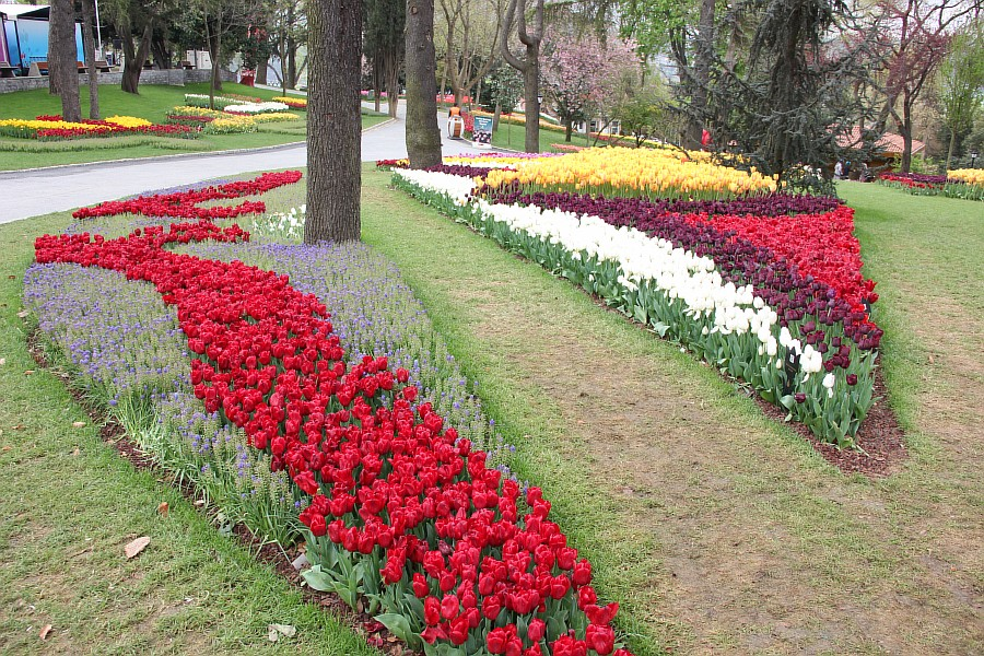 Цветы, тюльпаны, Эмирган, Стамбул, путешествия, Аксанов Нияз, фотография, Emirgan, Istanbul, kukmor, of IMG_4488