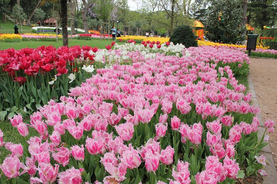 Цветы, тюльпаны, Эмирган, Стамбул, путешествия, Аксанов Нияз, фотография, Emirgan, Istanbul, kukmor, of IMG_4493