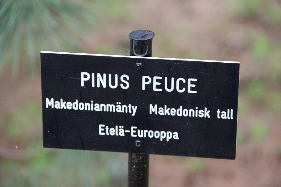 Дендрарий, Arboretum Mustila, Арборетум Мустила, Коувола, фотография, путешествия, финляндия, Аксанов Нияз, kukmor, of IMG_8325