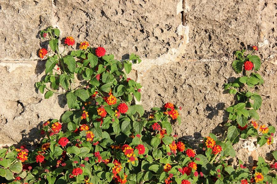 Крит, Греция, Ханья, фотография, путешествия, Аксанов Нияз, kukmor,  of IMG_6153