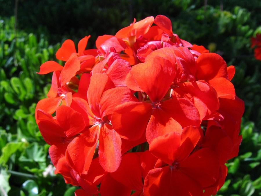 Цветы, Крит, фотография, Аксанов Нияз, путешествия, Греция, красота, kukmor, of IMG_2138
