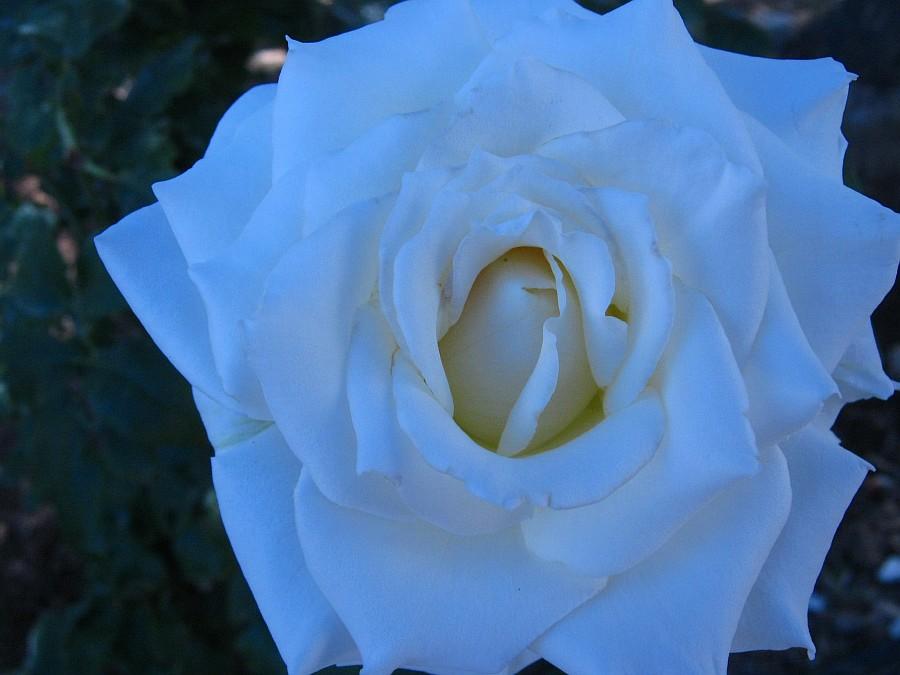 Цветы, Крит, фотография, Аксанов Нияз, путешествия, Греция, красота, kukmor, of IMG_2146
