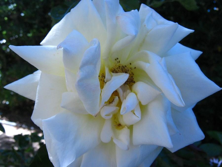 Цветы, Крит, фотография, Аксанов Нияз, путешествия, Греция, красота, kukmor, of IMG_2150