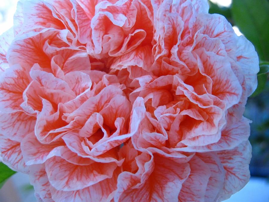Цветы, Крит, фотография, Аксанов Нияз, путешествия, Греция, красота, kukmor, of IMG_2162