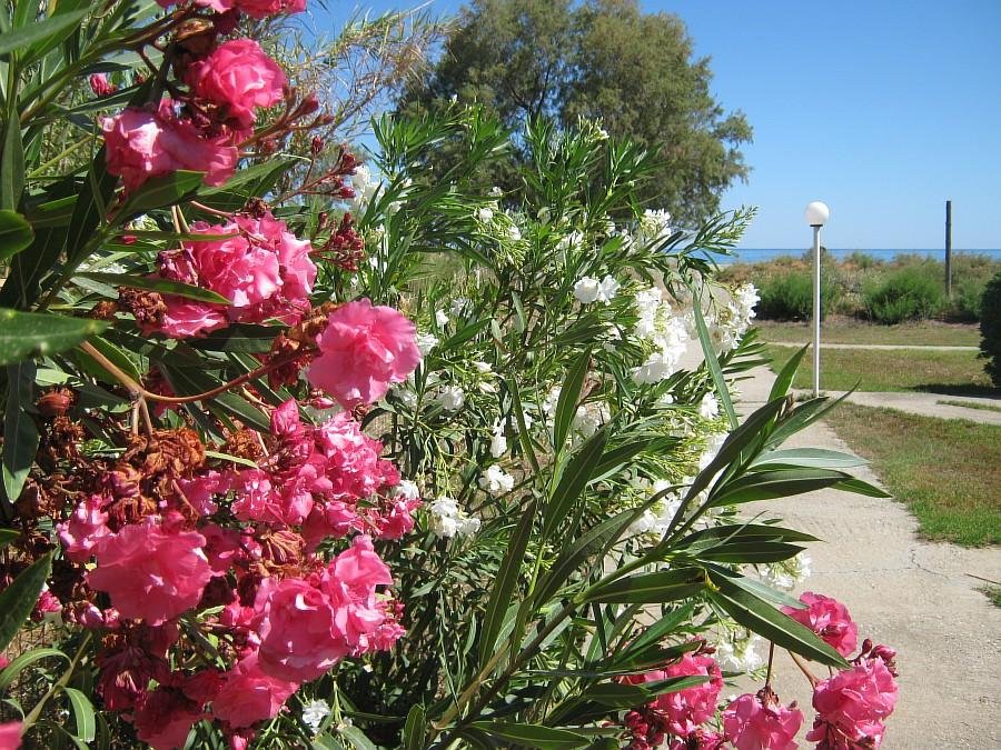 Цветы, Крит, фотография, Аксанов Нияз, путешествия, Греция, красота, kukmor, of IMG_2167