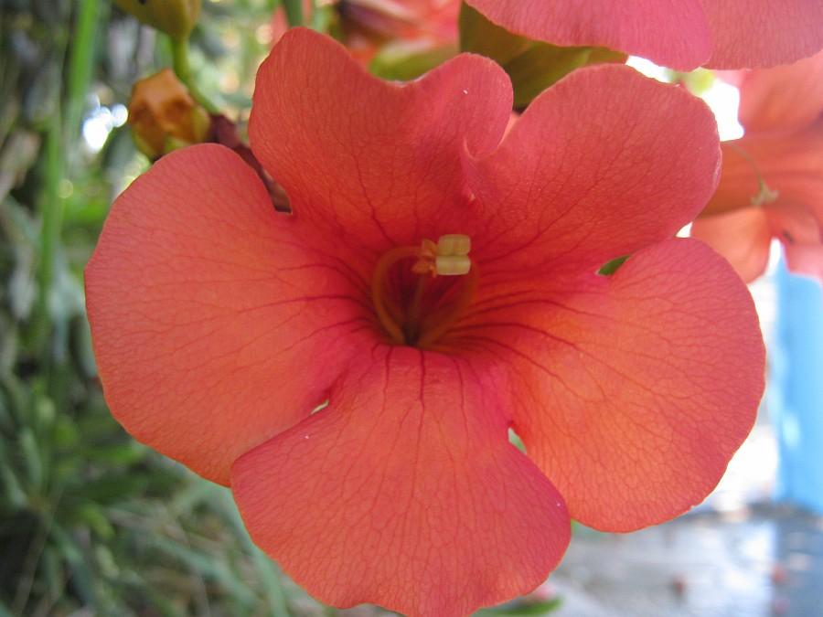 Цветы, Крит, фотография, Аксанов Нияз, путешествия, Греция, красота, kukmor, of IMG_2178