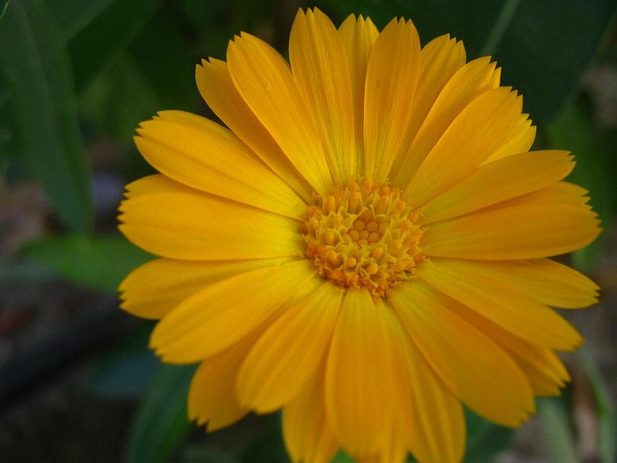 Цветы, Крит, фотография, Аксанов Нияз, путешествия, Греция, красота, kukmor, of IMG_2188