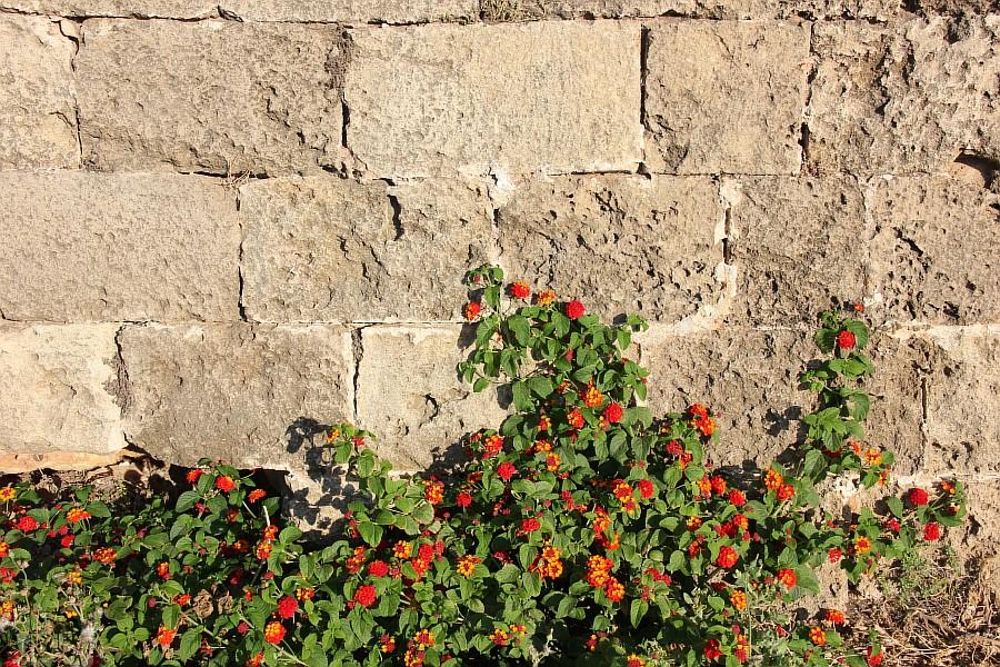 Цветы, Крит, фотография, Аксанов Нияз, путешествия, Греция, красота, kukmor, of IMG_2191