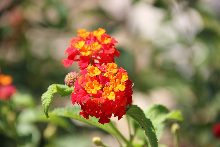 Цветы, Крит, фотография, Аксанов Нияз, путешествия, Греция, красота, kukmor, of IMG_7215