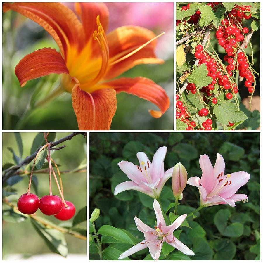 Кукмор, сад, ягоды, цветы, красота, фотография, Аксанов Нияз, kukmor, Татарстан,  of IMG_7800