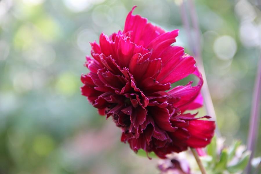 Кукмор, сад, ягоды, цветы, красота, фотография, Аксанов Нияз, kukmor, Татарстан,  of IMG_7821