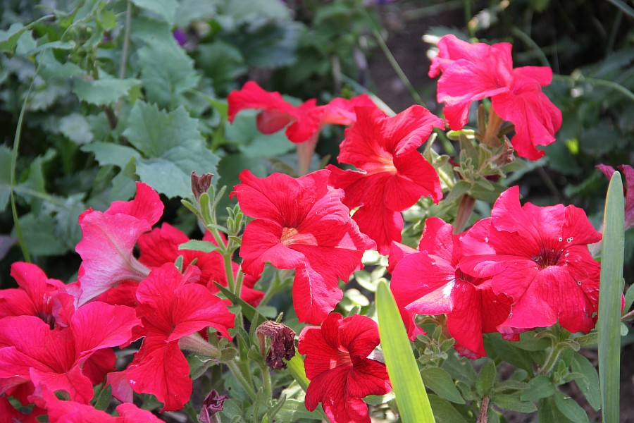 Кукмор, сад, ягоды, цветы, красота, фотография, Аксанов Нияз, kukmor, Татарстан,  of IMG_7839