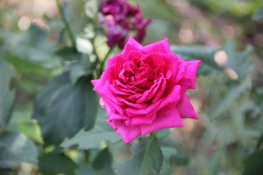 Кукмор, сад, ягоды, цветы, красота, фотография, Аксанов Нияз, kukmor, Татарстан,  of IMG_7866