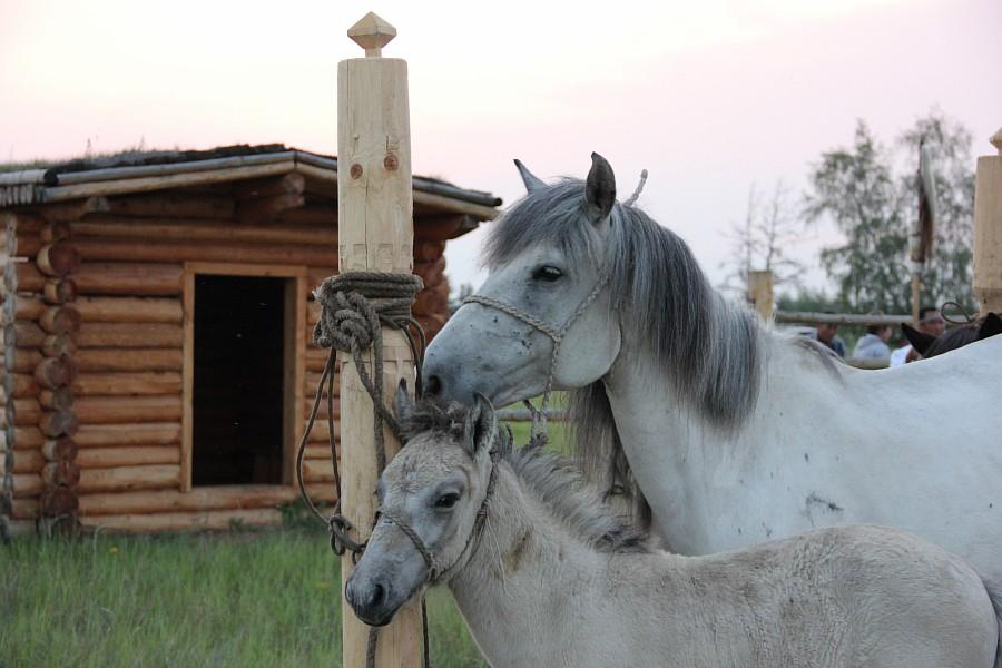 Якутия, путешествия, Ысыах, фотография, Аксанов Нияз, kukmor, of IMG_1379