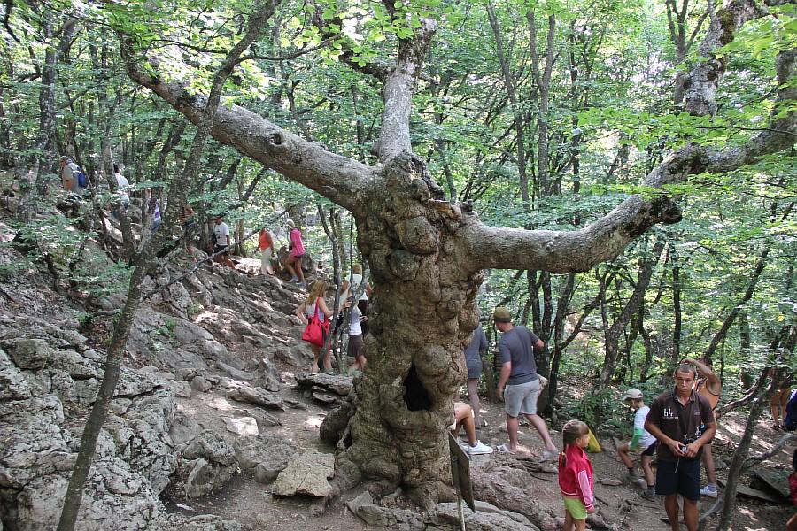 Украина, фотография, путешествия, Аксанов Нияз, kukmor, природа, блогеры,  of IMG_5610
