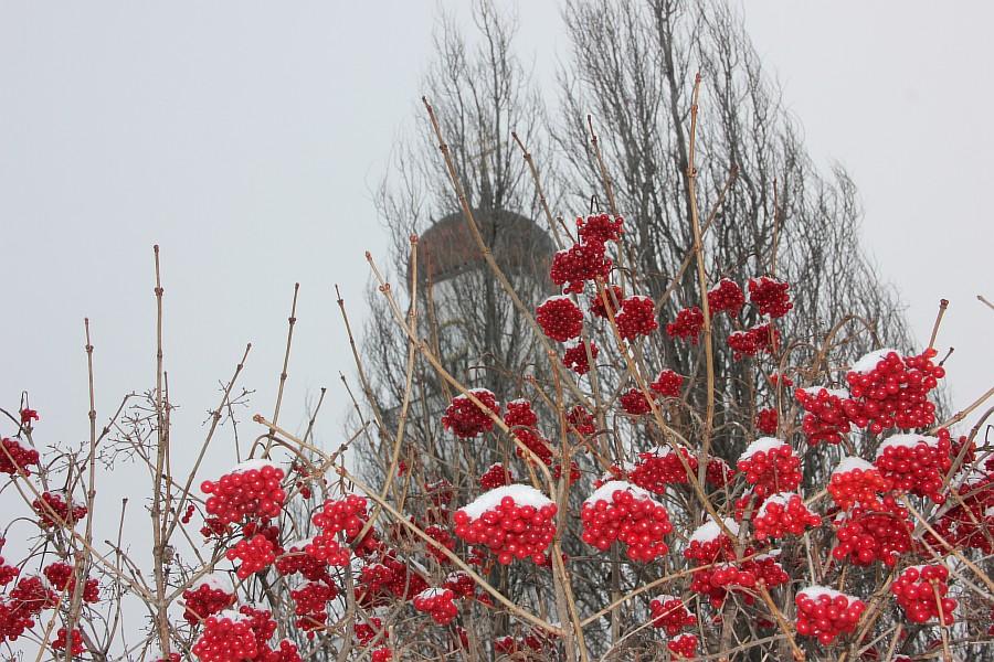 Казань, Раифский монастырь, Раифа, Новый год, Рождество, фотографии, Аксанов Нияз, kukmor, зима, 2014, жж, lj, of IMG_7666