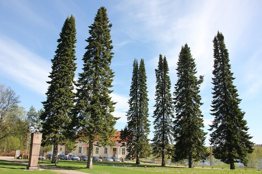 Finland, lj, путешествия, Финляндия, фотография, Аксанов Нияз, kukmor, жж, природа, животные, еда, озеро, море, лес, блогеры,  of IMG_6747