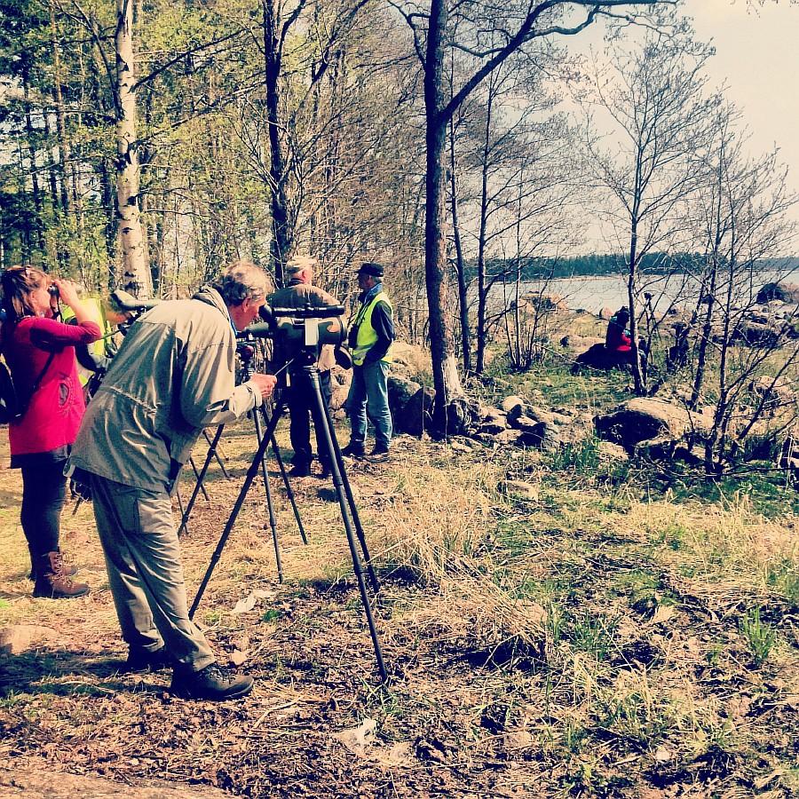 Finland, lj, путешествия, Финляндия, фотография, Аксанов Нияз, kukmor, жж, природа, животные, еда, озеро, море, лес, блогеры,  of IMG_7430