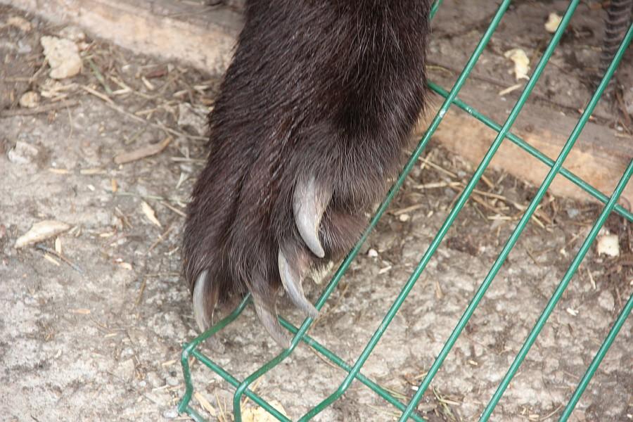 Медведь, Царская Охота, Алтай, фотография, путешествия, Аксанов Нияз, kukmor, жж, of IMG_0870
