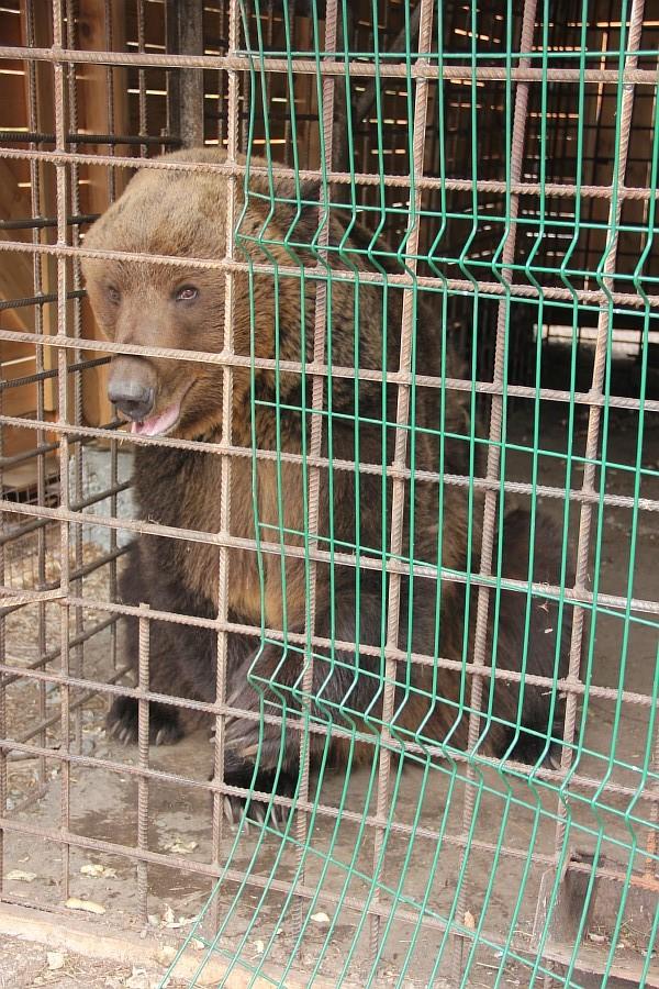 Медведь, Царская Охота, Алтай, фотография, путешествия, Аксанов Нияз, kukmor, жж, of IMG_1861