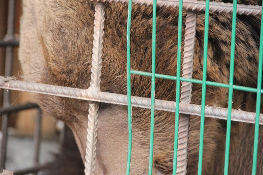 Медведь, Царская Охота, Алтай, фотография, путешествия, Аксанов Нияз, kukmor, жж, of IMG_1869