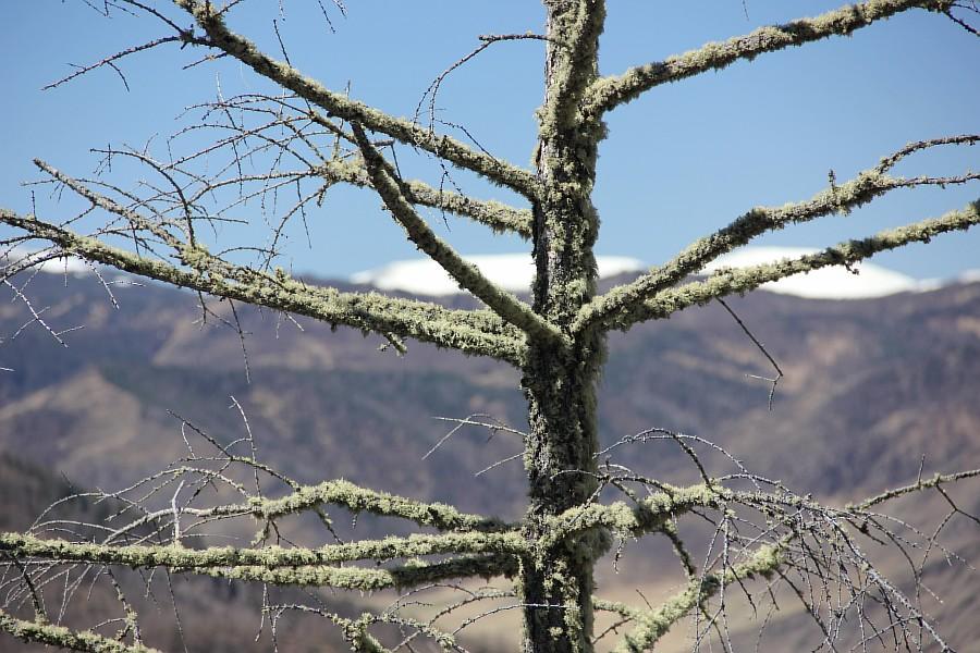 Алтай, горы, путешествия, природа, красота, Чуя, Катунь, Аксанов Нияз, kukmor, жж, of IMG_2758