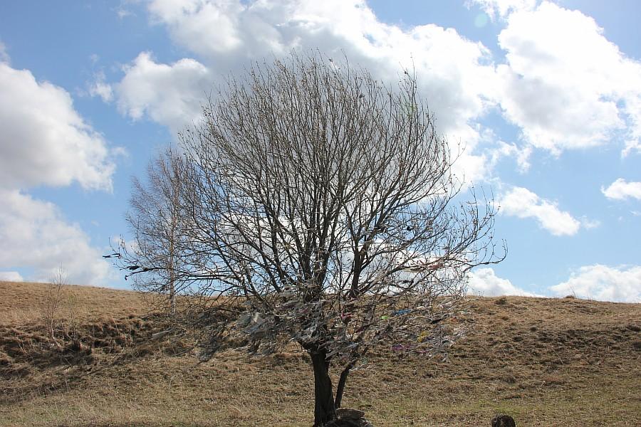 Алтайский край, Алтай, путешествия, отдых, фотография, Аксанов Нияз, kukmor, жж, лошадь, облака, of IMG_3168