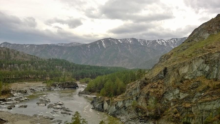 Алтай, дикая вишня, цветы, Катунь, горы, путешествия, Аксанов Нияз, фотография, kukmor,жж, of IMG_2119