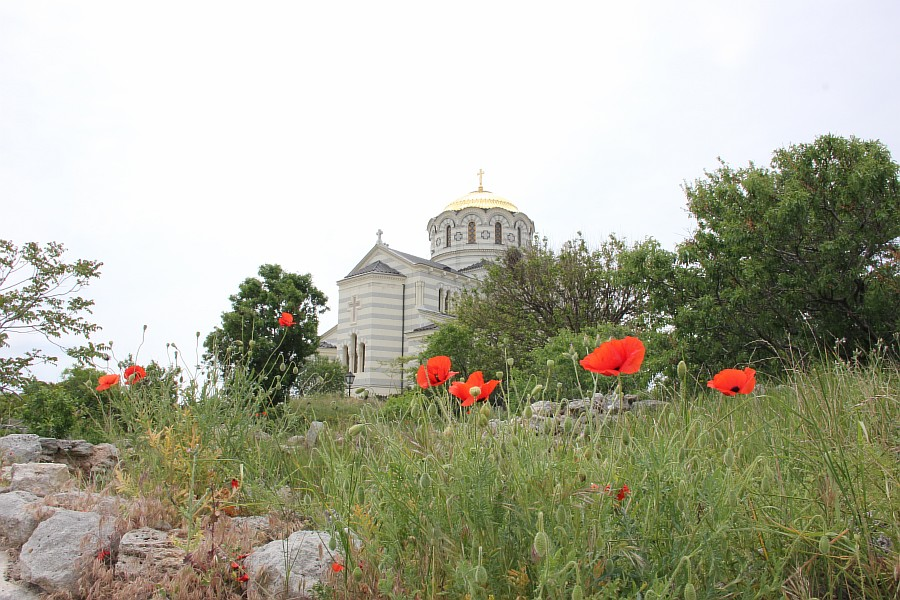 Маки, цветы, Херсонес, Севастополь, путешествия, фотография, Аксанов Нияз, of IMG_7338