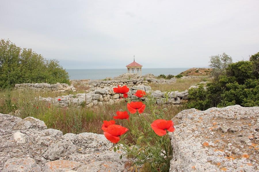 Маки, цветы, Херсонес, Севастополь, путешествия, фотография, Аксанов Нияз, of IMG_7340