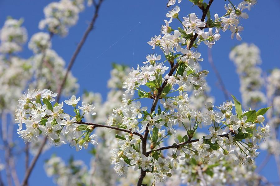 Кукмор, цветы, Аксанов Нияз, сад, of IMG_6790