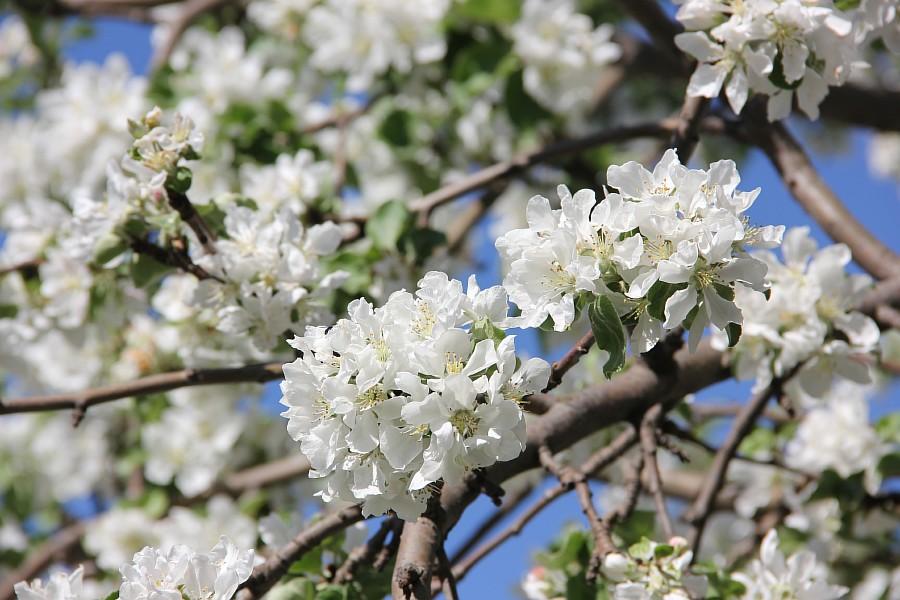 Кукмор, цветы, Аксанов Нияз, сад, of IMG_7770