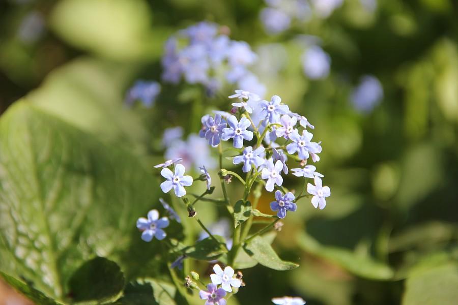 Кукмор, цветы, Аксанов Нияз, сад, of IMG_7775