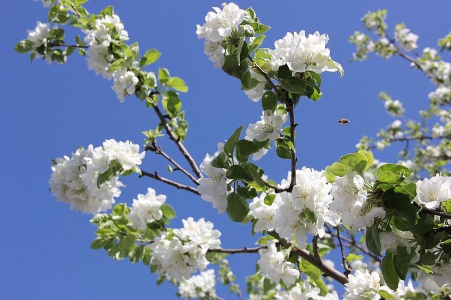 Кукмор, цветы, Аксанов Нияз, сад, of IMG_7776