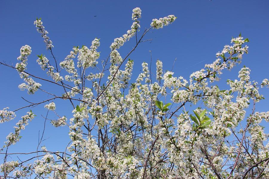 Кукмор, цветы, Аксанов Нияз, сад, of IMG_7788