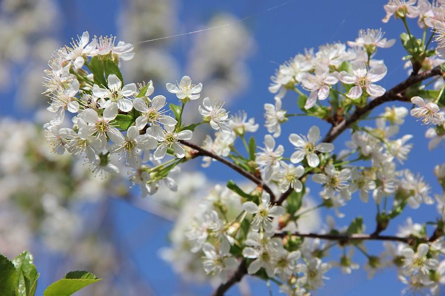 Кукмор, цветы, Аксанов Нияз, сад, of IMG_7789