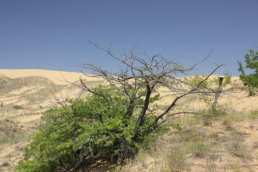Сарыкумские барханы, Дагестан, фотография, Аксанов Нияз, kukmor, 100скфо, 100skfo, пустыня, барханы, жж, блогтур, of IMG_4240