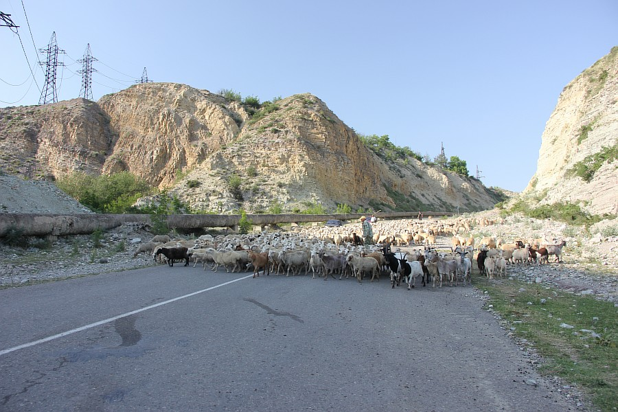 Дагестан, путешествия, автодорогы. бараны, фотография, Аксанов Нияз, kukmor, горы, чирейское водохранилище, сулакский каньон, of IMG_4898