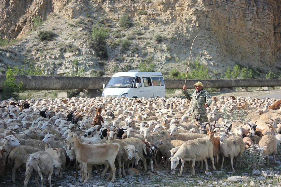 Дагестан, путешествия, автодорогы. бараны, фотография, Аксанов Нияз, kukmor, горы, чирейское водохранилище, сулакский каньон, of IMG_4923