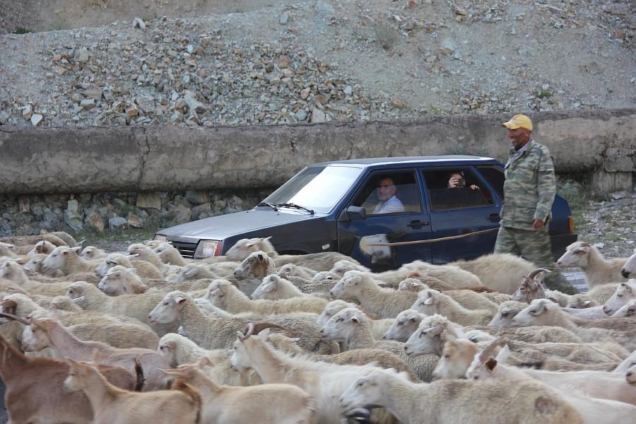 Дагестан, путешествия, автодорогы. бараны, фотография, Аксанов Нияз, kukmor, горы, чирейское водохранилище, сулакский каньон, of IMG_4929