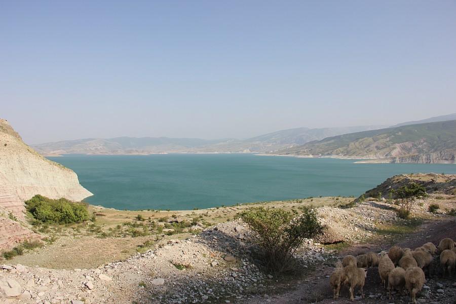 Дагестан, путешествия, автодорогы. бараны, фотография, Аксанов Нияз, kukmor, горы, чирейское водохранилище, сулакский каньон, of IMG_4979