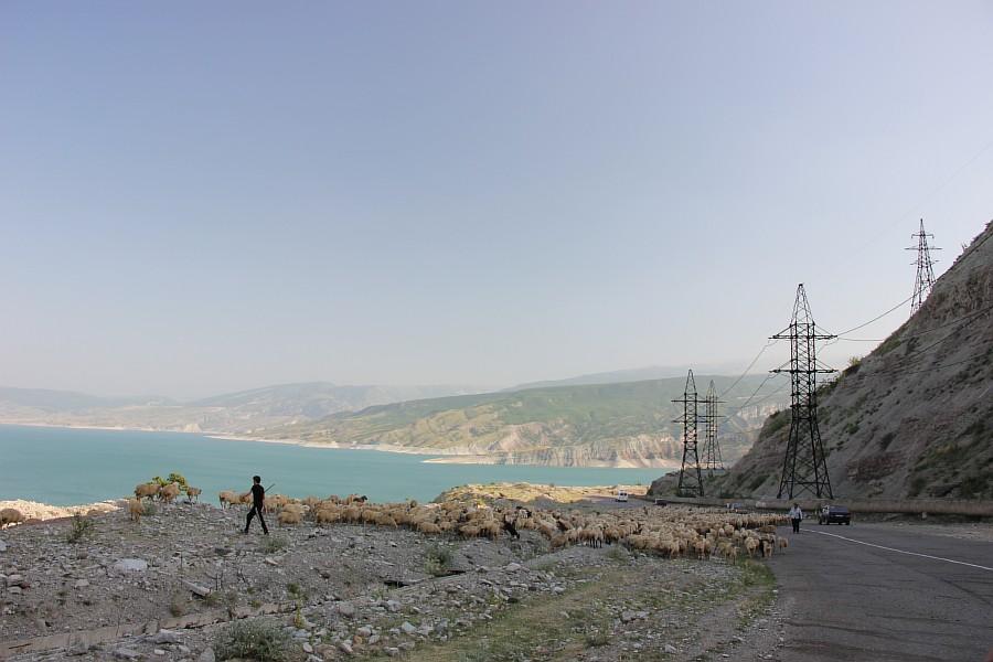 Дагестан, путешествия, автодорогы. бараны, фотография, Аксанов Нияз, kukmor, горы, чирейское водохранилище, сулакский каньон, of IMG_4989